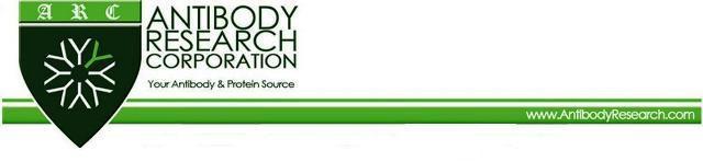 antibody research